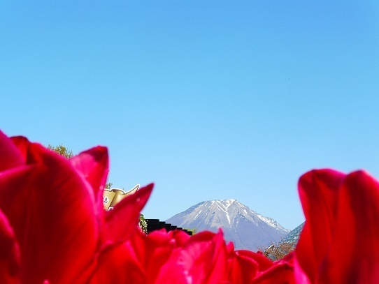 花と大山1390274.jpg