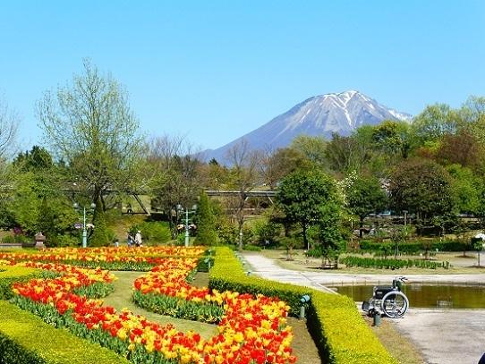 花と大山1390279.jpg
