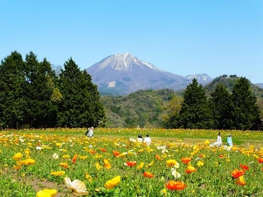 花と大山1390291.jpg