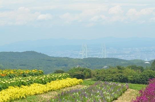 あわじ花さじき6562.jpg