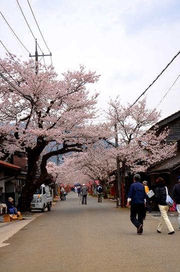 がいせん桜3771.jpg