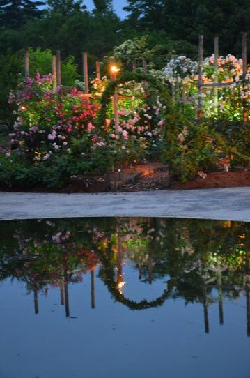 とっとり花回廊のバラ園2571.jpg
