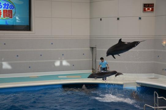 イルカのジャンプ2031.jpg