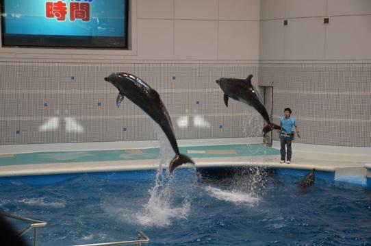 イルカのジャンプ2041.jpg