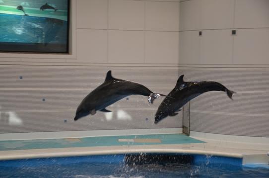 イルカのジャンプ2049.jpg