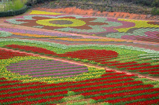 チューリップで描く花4224.jpg