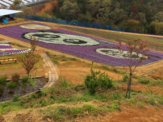 ビオラの花絵0383.jpg