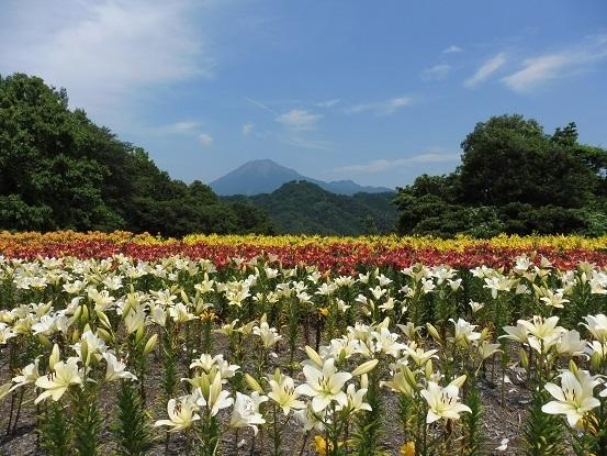ユリと大山1100104.jpg