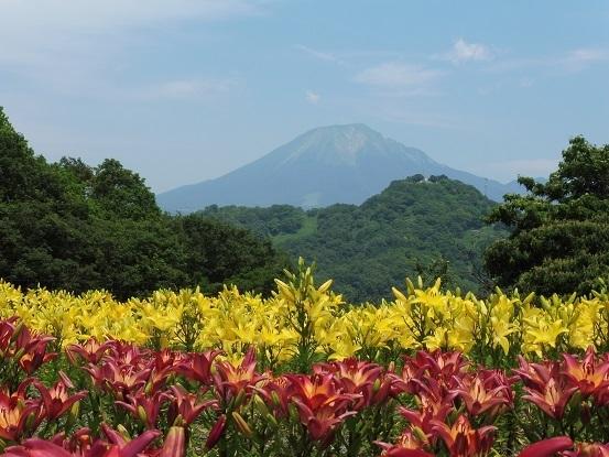 ユリと大山1100116.jpg
