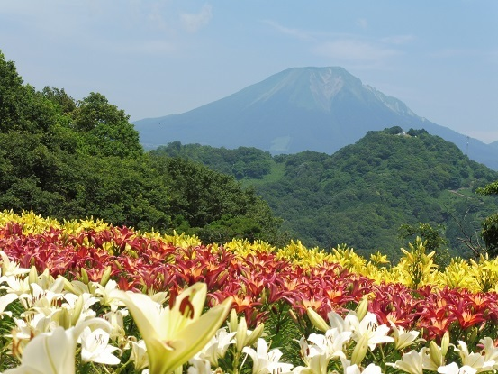 ユリと大山1100128.jpg