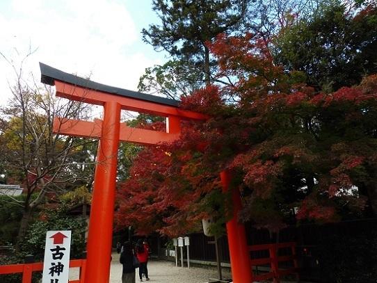 下鴨神社紅葉1180019.jpg
