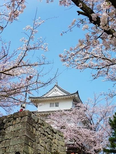 丸亀城1390258.jpg