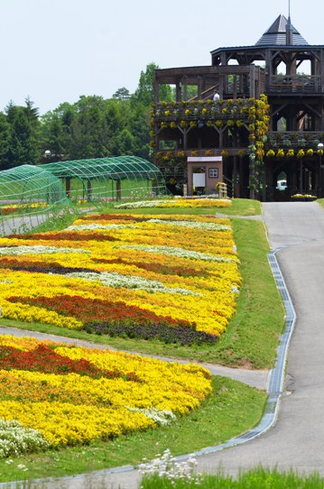 備北丘陵公園の花風景1772.jpg