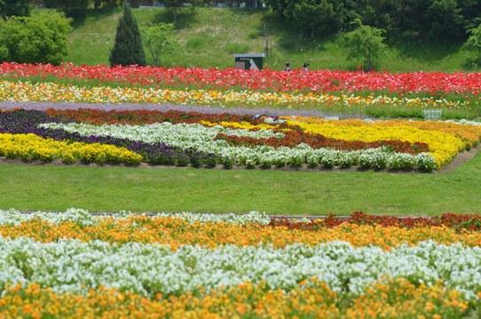 備北丘陵公園の花風景1838.jpg