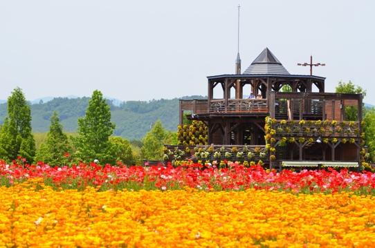 備北丘陵公園の花風景1910.jpg