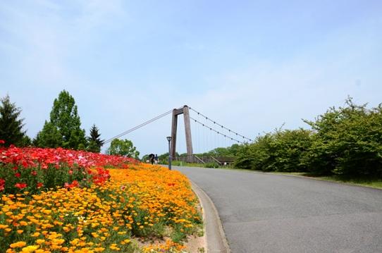 備北丘陵公園の花風景1916.jpg