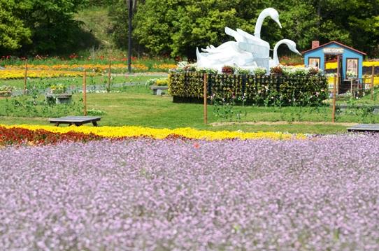 備北丘陵公園の花風景1950.jpg