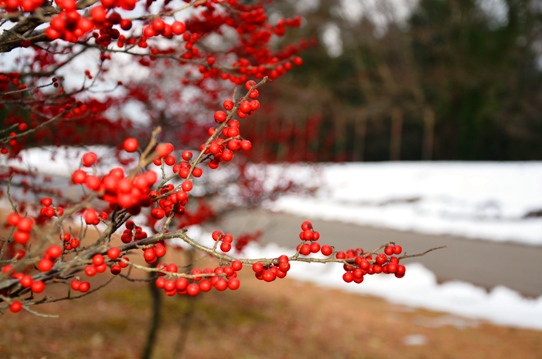 冬の花回廊8650.jpg