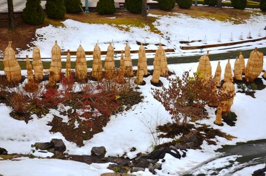 冬の花回廊8661.jpg