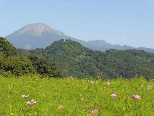 大山とコスモス1300375.jpg
