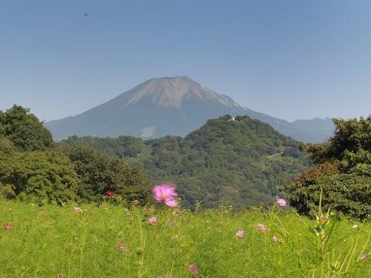 大山とコスモス1300379.jpg