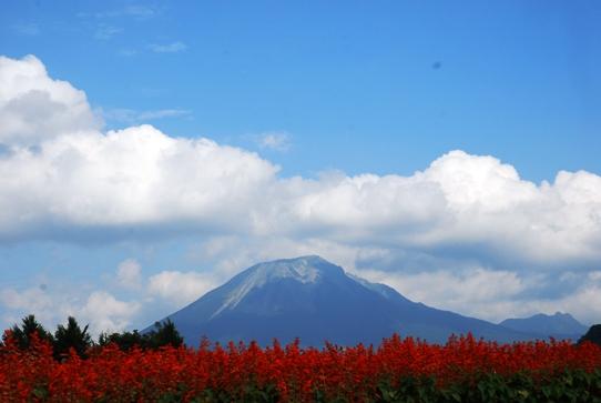 大山とサルビア0045・2010.jpg