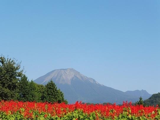 大山とサルビア1300385.jpg