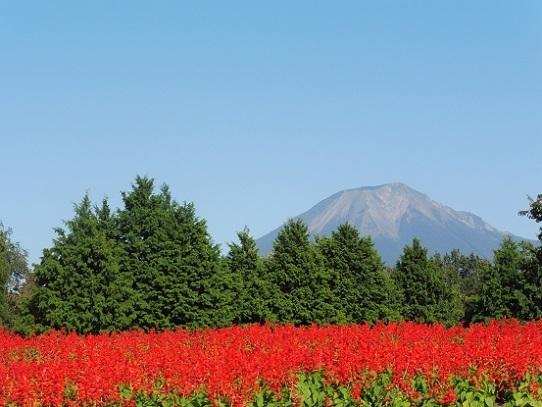 大山とサルビア1300390.jpg