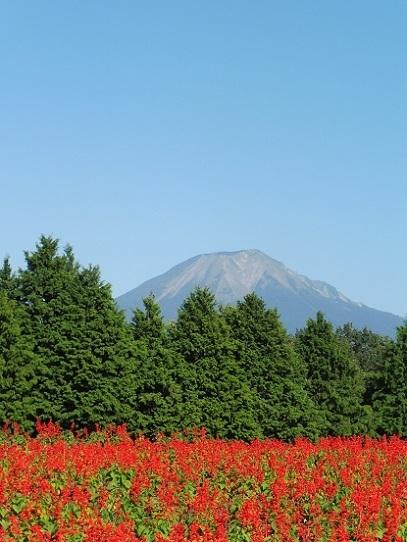 大山とサルビア1300394.jpg