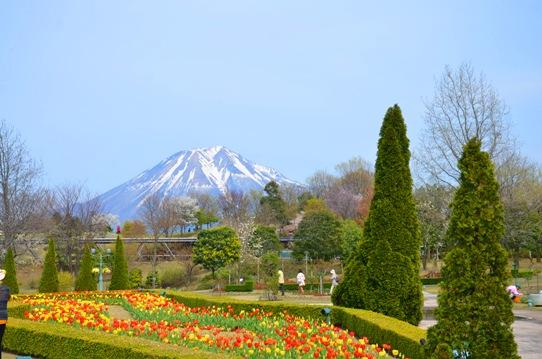 大山とチューリップ0712.jpg