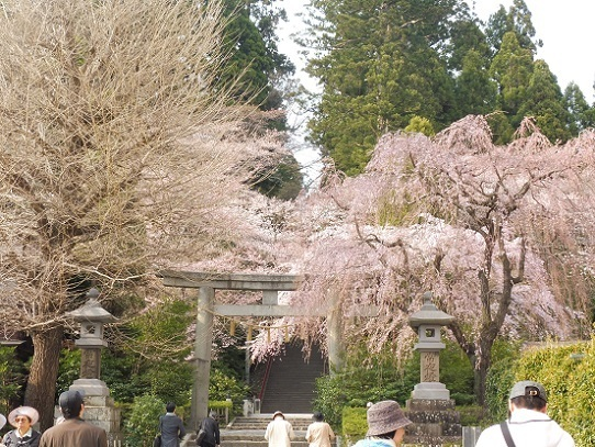 大崎八幡宮1220088.jpg