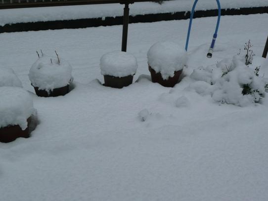 大雪P1050770.jpg