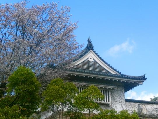 岡山城と桜1040765.jpg