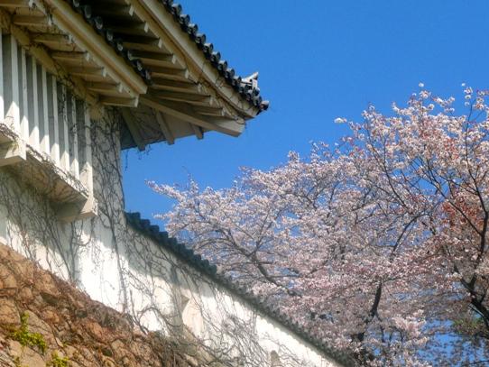 岡山城と桜1040769.jpg