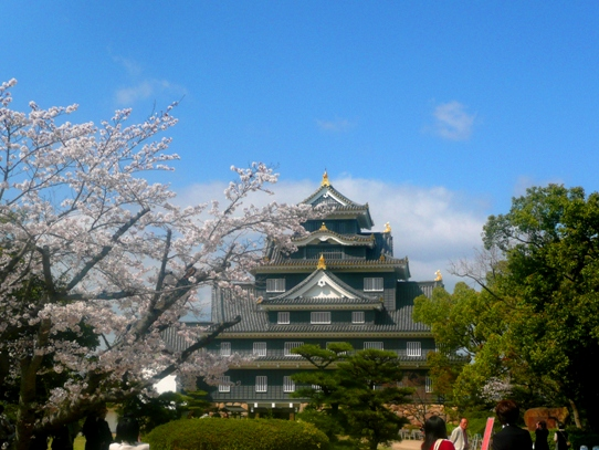 岡山城と桜1040774.jpg