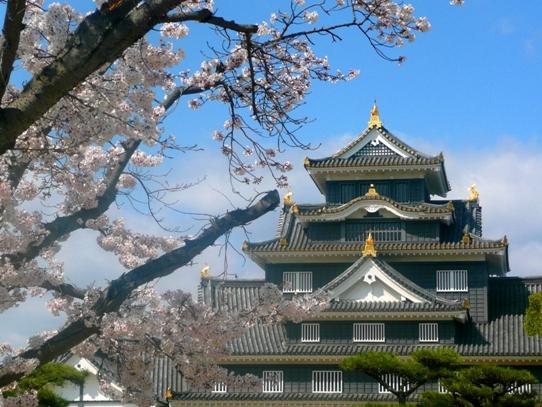 岡山城と桜1040778.jpg