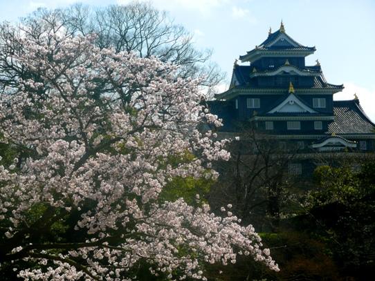 岡山城と桜1040807.jpg