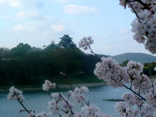 岡山城と桜1040834.jpg