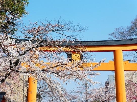 平野神社1390239.jpg