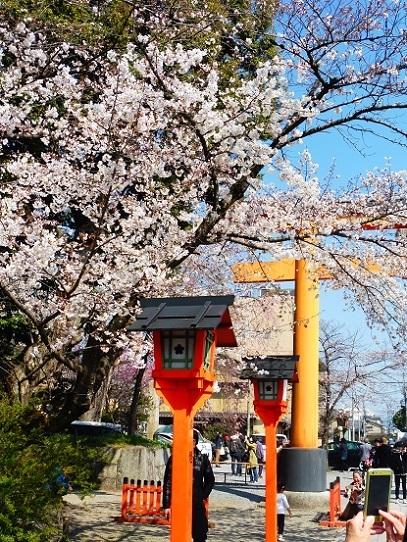 平野神社1390240.jpg