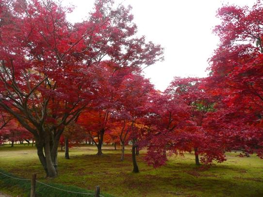 後楽園の紅葉1050421.jpg