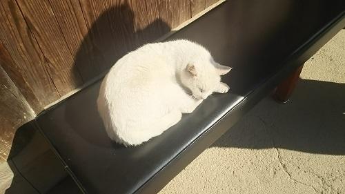 日だまりの猫0417.jpg