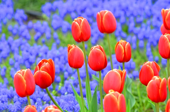 春爛漫の花回廊3918.jpg