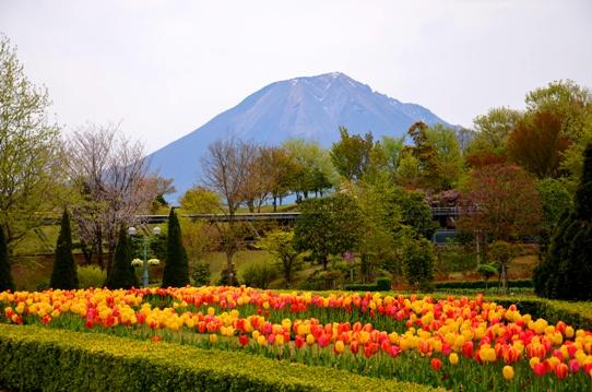 春爛漫の花回廊4007.jpg