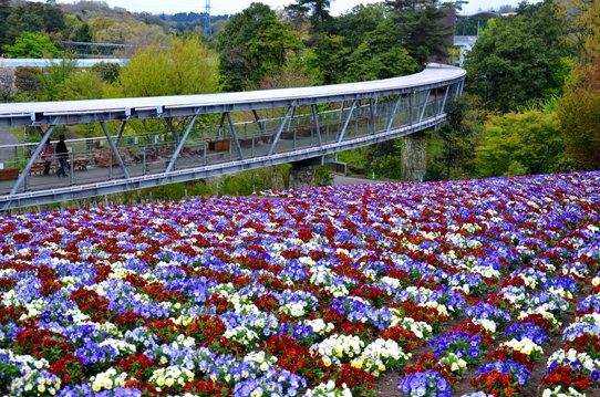 春爛漫の花回廊4123.jpg