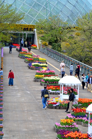 春爛漫の花回廊4152.jpg