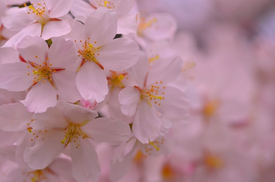 桜6369.jpg