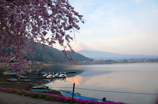 桜と富士1252.jpg