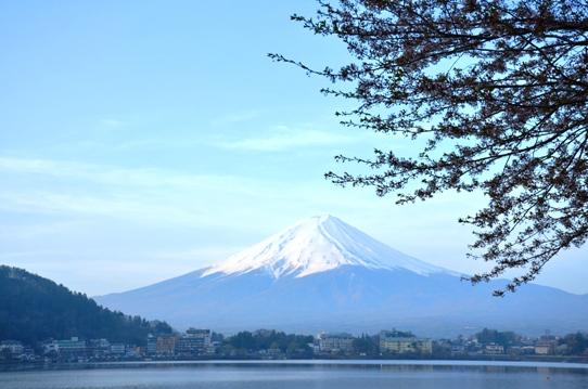 桜と富士1281.jpg