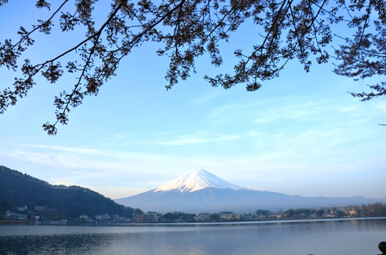 桜と富士1282.jpg